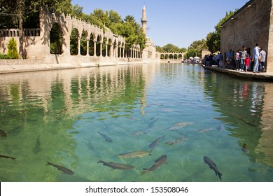 SANLIURFA, TURKEY - AUGUST 15: Unidentified visitors to the Holy Lake with sacred fish in Golbasi Park and Halil Rahman Mosque. August 15, 2013 in Sanliurfa, Turkey.