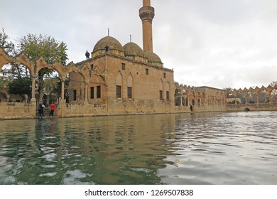 SANLIURFA, TURKEY - NOVEMBER 15, 2018 : Fish swim in Balikli Gol (Pool of Sacred Fish) also known as Abraham's Pool in Golbasi Park.Historical place.