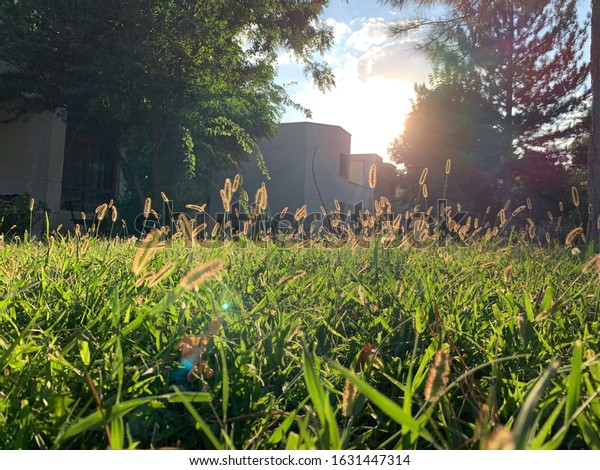 Sanliurfa/Turkey - September 2019: Green grass and herbs  standing in house garden as the golden sunset streams through the herbs.