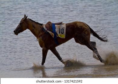 SANLUCAR DE BARRAMEDA, CADIZ, SPAIN - AUGUST 11: Accidented horse  run on horses races of the beach of Sanlucar de Barrameda on August 11, 2011 in Sanlucar de Barrameda, Cadiz, Spain.