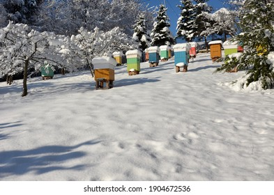 Sanok  Poland – January, 21, 2021: An amateur apiary on a sunny winter day. The hives covered with a thick layer of snow.