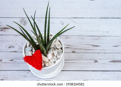 Sansevieria in ceramic pot with red heart. Top view. White old wood background.