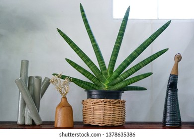 Sansevieria stuckyi in basket and some garden decoration