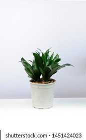 Sansevieria trifasciata or Snake plant in pot on old wood background. Home and garden concept. Interior decoration.