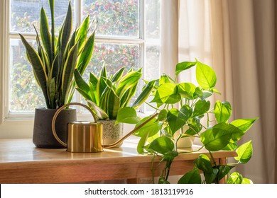 A sansevieria trifasciata snake plant in the window of a modern home or apartment interior. - Shutterstock ID 1813119916