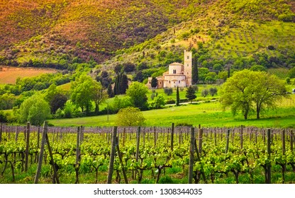 Sant Antimo, Castelnuovo Abate Montalcino church, vineyards and secular olive tree. Tuscany, Italy, Europe