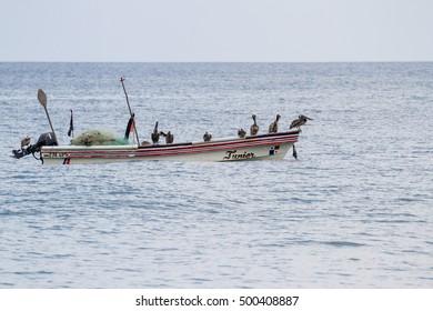 Santa Clara, Panama- June 12: Brown pelicans perched on a small fishing boat. June 12 2016, Santa Clara, Panama.
