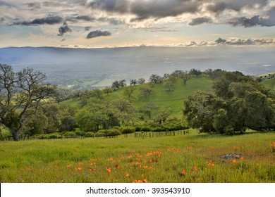Santa Clara Valley from Joseph D. Grant Country Park, Santa Clara County, California, USA. Silicon Valley from Mount Hamilton in springtime, filled with california poppies and oak woodland.