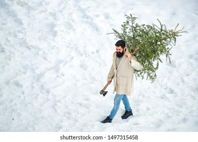 Santa Claus with Christmas tree. Bearded Man cutting Christmas tree. Hipster woodsman with Christmas tree. Happy father with Christmas tree on a snowy winter walk