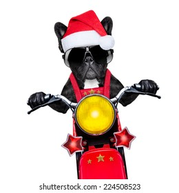 santa claus dog on motorbike bringing presents or gifts to everyone,  isolated on white blank white background