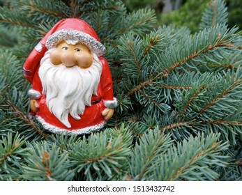 Santa Claus in the fir forest. A cute little garden gnome in Santa Claus costume hides in the forest between pine branches. (Not copyrighted)