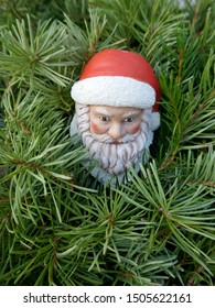 Santa Claus in the fir forest. A little garden gnome in Santa Claus costume hides in the forest between pine branches. (not copyrighted)
