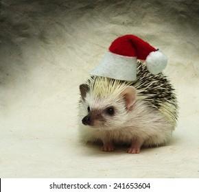 418d3bdd4d018 santa claus hedgehog christmas background