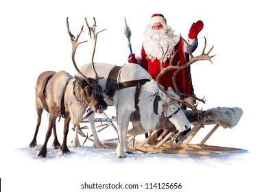 Santa Claus are near his reindeers in harness on the white background.
