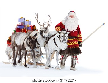 Santa Claus are near his reindeers in harness, isolated on the white background.