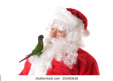 Santa Claus on a White Background with a pet green cheek conure bird.  The bird is sitting in his beard and it looks like they are talking