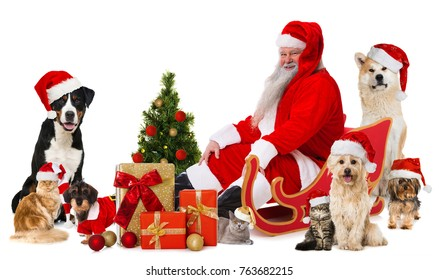 Santa claus with pets