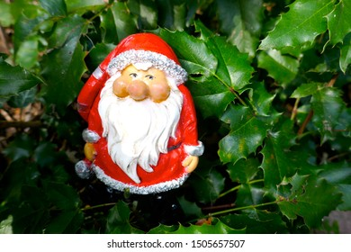 Santa Claus.Christmas time. A little garden gnome in Santa Claus costume hides in the forest  between prickly holly branches  (not copyrighted)