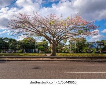 Santa Cruz de la Sierra/Bolivia-06-13-2020: Toborochi tree at the highway with a blue sky with clouds landscape background at daylight
