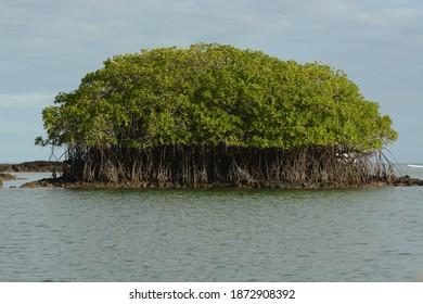 Santa Cruz Island, Galapagos Islands, Ecuador. 23 Dec. 2015. Mangroves and tide line.