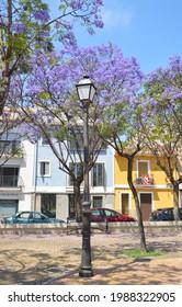 Santa Faz, Alicante, Spain: June 8, 2021:  Lamppost and Jacaranda Trees in bloom in Plaza del Carrer Mitja Galta a public park at the entrance to Santa Faz.