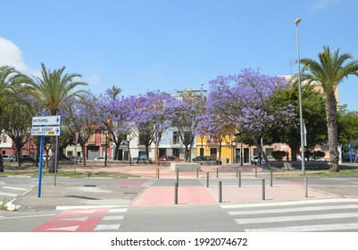 Santa Faz, Alicante, Spain - June 8, 2021: Pedestrian crosswalk  leading into the Santa Faz Plaza filled with Jacaranda trees in full bloom full of purple flowers.