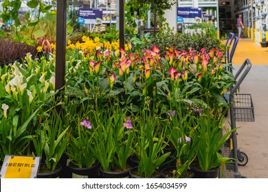 Santa Maria, California/USA - February 22, 2020.  Garden center and floral market. Variety of flowers, trees, plants, different types of potting soil and organic fertilizers