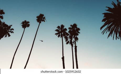 Santa Monica Palms in sunset.