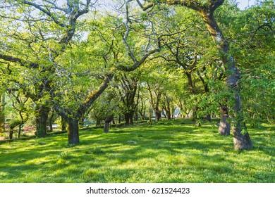 Santa Sunana oak forest in Santiago de Compostela