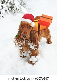 Santa's Little Helper, cute Spaniel with Holly in mouth bearing Christmas Gifts
