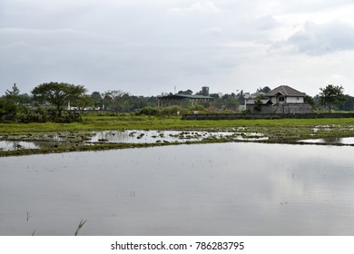 Santiago City, Isabela, Philippines, December 15, 2017, Santiago City Sightseeing, Road and city view, Rice Field, one of major cities of rice procedures in the Philippines.