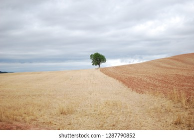 Santiago de Compostela, Camino de Santiago, The way of st. James, across northern Spain with fields, gray clouds and a lone tree.