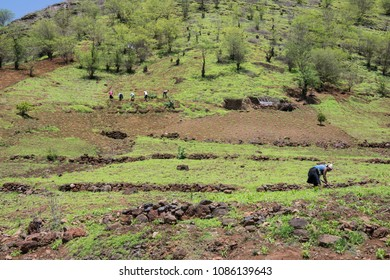 Santiago island, Cape Verde - february 11, 2016: Peasants working on the cultivation terraces of the Sierra de Malagueta in the interior of the island