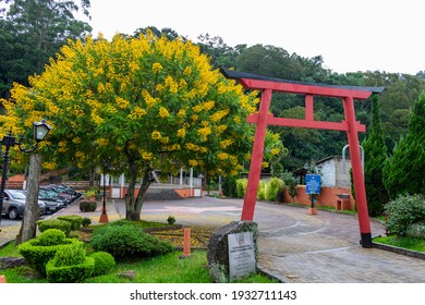 Santo Antonio do Pinhal - March 8, 2021: Portal in a Japanese garden with a tree of yellow flowers in the background.