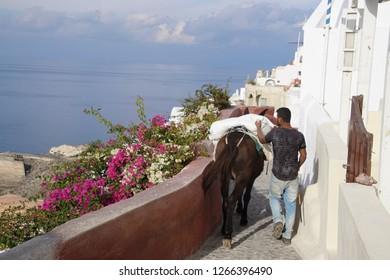 SANTORINI, GREECE - DEC 2, 2018 - Mule carrying building supplies through the steep narrow streets of Oia, Santorini, Greece