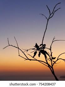Santorini Leaf Silhouette