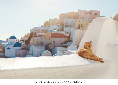 Santorini Stray Ginger Cat