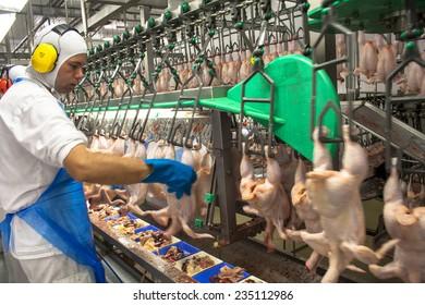 SAO JOSE, SANTA CATARINA, BRAZIL, SEPTEMBER 16, 2009: processing factory chicken,