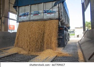 Sao Jose, SC, Brazil, September 24, 2009. Truck makes a corn dump at an animal feed factory in Santa Catarina State