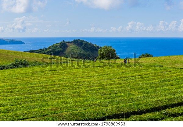 Sao Miguel, Azores island, Portugal, August 14, 2020: People at the tea plantation of Gorreana tea factory Cha Gorreana. The oldest, and only, tea plantation in Europe, Sao Miguel island,