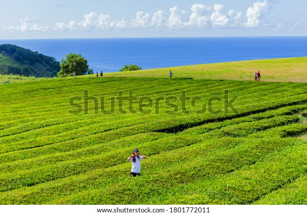 Sao Miguel, Azores island, Portugal, August 14, 2020: People at the tea plantation rows and building of Gorreana tea factory Cha Gorreana. The only, tea plantation in Europe, Azores, Portugal