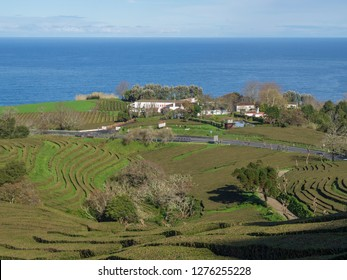SAO MIGUEL ISLAND, AZORES, PORTUGAL, December 24, 2018: View on tea plantation rows and building of Gorreana tea factory Cha Gorreana with ocean on horizon. The oldest, and only, tea plantation in