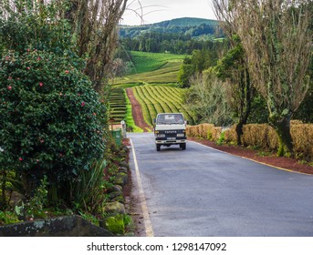 SAO MIGUEL ISLAND, AZORES, PORTUGAL, December 24, 2018: Old car truck driving on entrance road to the tea plantation of Gorreana tea factory Cha Gorreana with green tea rows, garden and trees. The