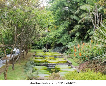SAO MIGUEL, PORTUGAL - AUGUST 19, 2018: Terra Nostra Park, Azores Islands.