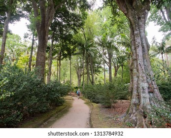 SAO MIGUEL, PORTUGAL - AUGUST 19, 2018: Terra Nostra Park in Sao Miguel, Azores Islands.
