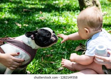 Sao Paulo, Sao Paulo, Brazil, December 15, 2018, Ibirapuera picnic, baby and dog interaction