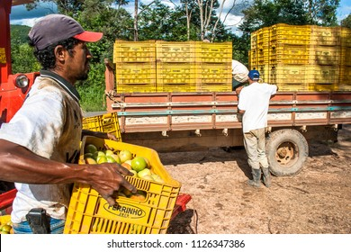 Sao Paulo, Brazil, December, 18, 2009. Workers load a truck with freshly picked tomatoes on a farm in Apiai, Sao Paulo state