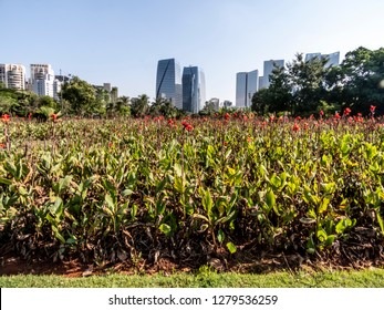 Sao Paulo, Brazil, January 08, 2019. People enjoy for their leisure in the People's Park (Parque do Povo), in west side of Sao Paulo, Brazil