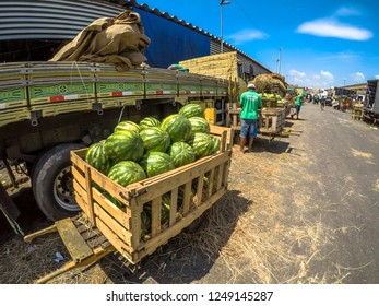Warehouse manufacturing tuberous, vegetable, melon, crop and indoor products