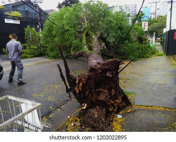 Sao Paulo city, Sao Paulo state/New Avenue Independencia, 1066, Brazil South America. 10/13/2018 Rain with strong wind knocks tree on New Avenue Independencia, 1066, Sao Paulo city, Brazil.